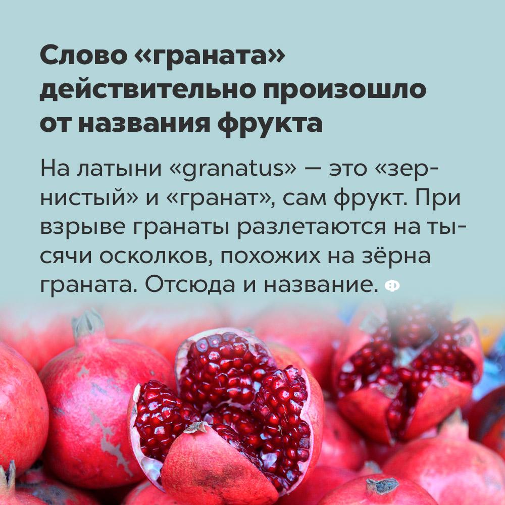 Слово «граната» действительно произошло отназвания фрукта. На латыни «granatus» — это «зернистый» и «гранат», т. е. сам фрукт. При взрыве гранаты разлетаются на тысячи осколков, похожих на зёрна граната. Отсюда и название.