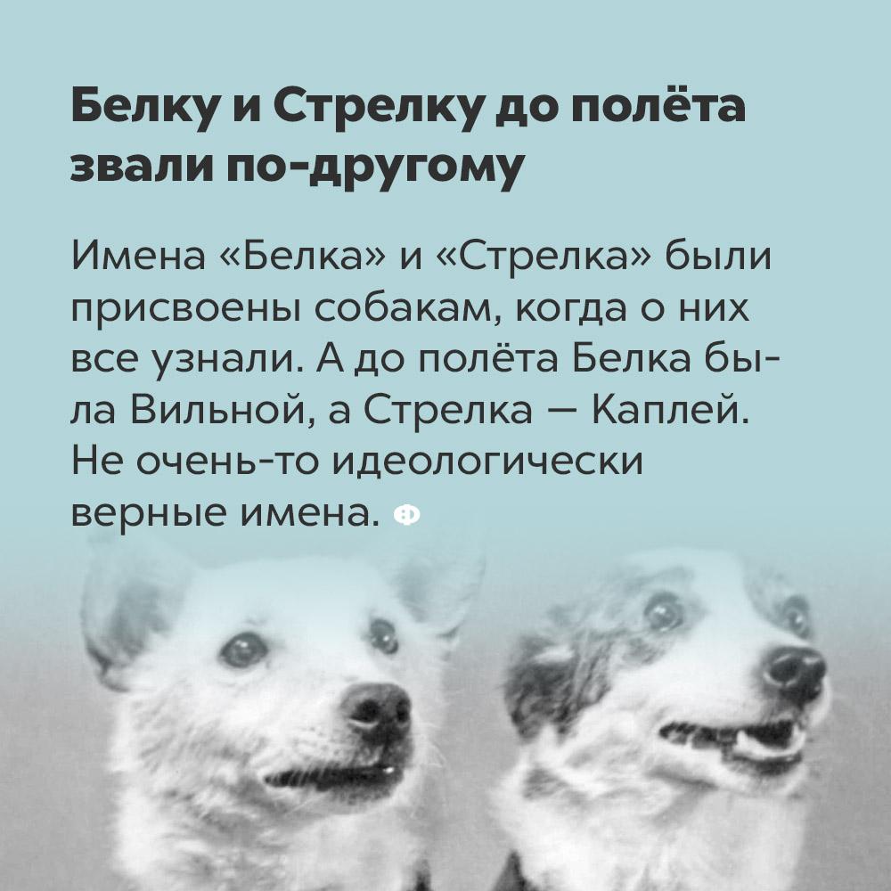 Белку и Стрелку до полёта звали по-другому. Имена «Белка» и «Стрелка» были присвоены собакам тогда, когда о них все узнали. А до их исторического полёта Белка была Вильной, а Стрелка Каплей. Не очень-то идеологически верные имена.
