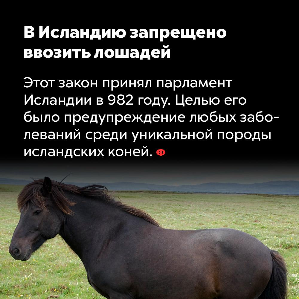 В Исландию запрещено ввозить лошадей.