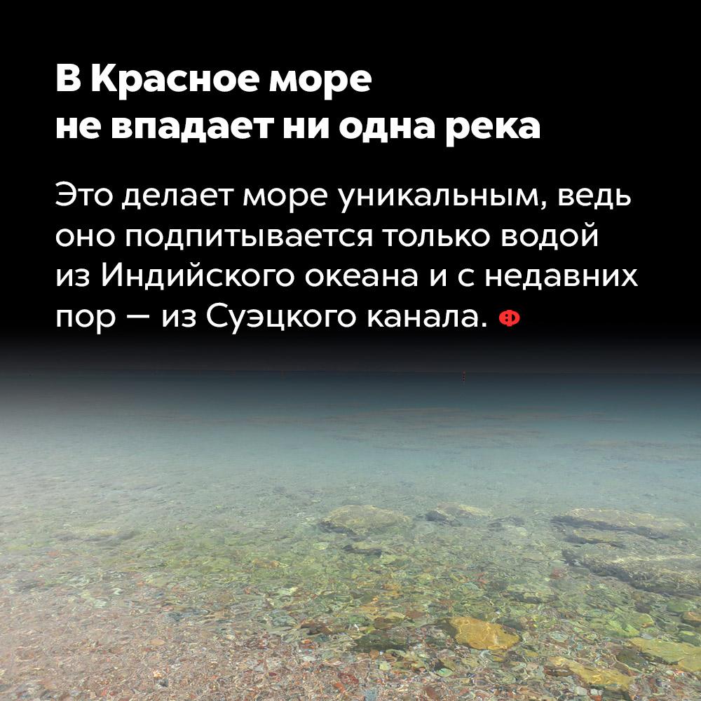 В Красное море не впадает ни одна река.