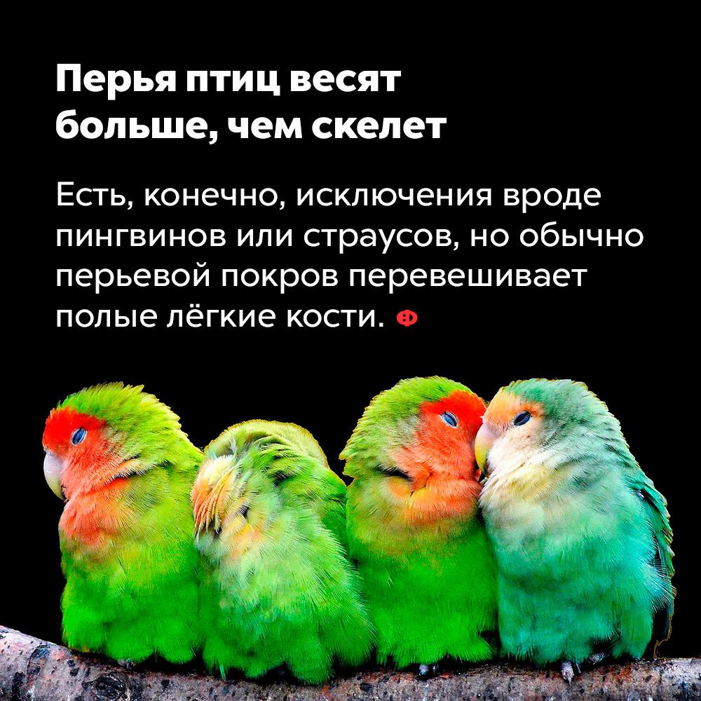 Перья птиц весят больше, чем скелет.
