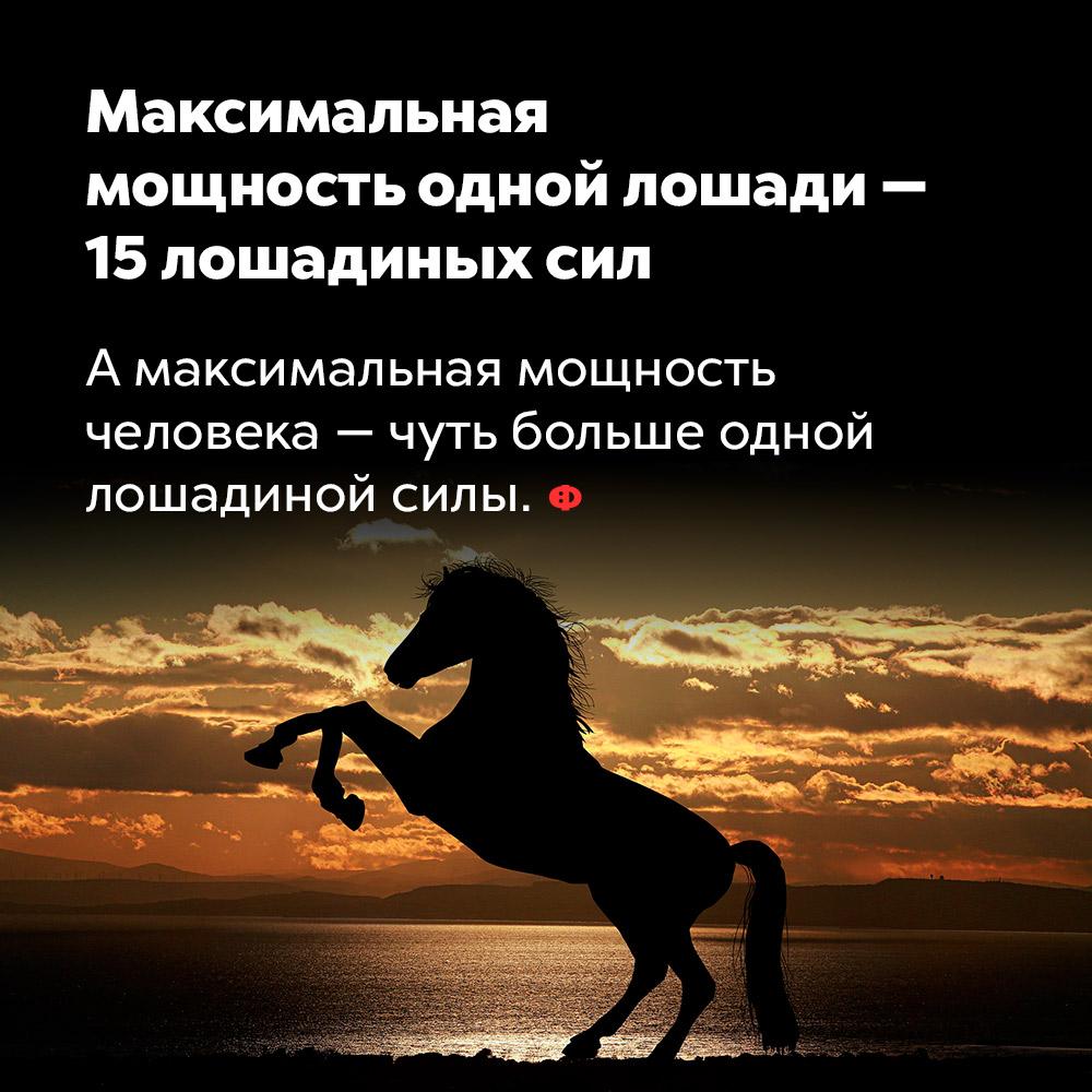 Максимальная мощность одной лошади — 15лошадиных сил. А максимальная мощность человека — чуть больше одной лошадиной силы.
