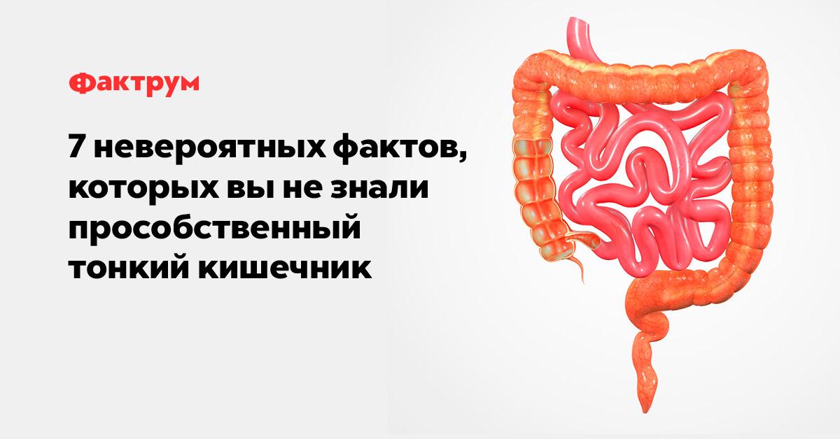 7невероятных фактов, которых вы незнали про собственный тонкий кишечник