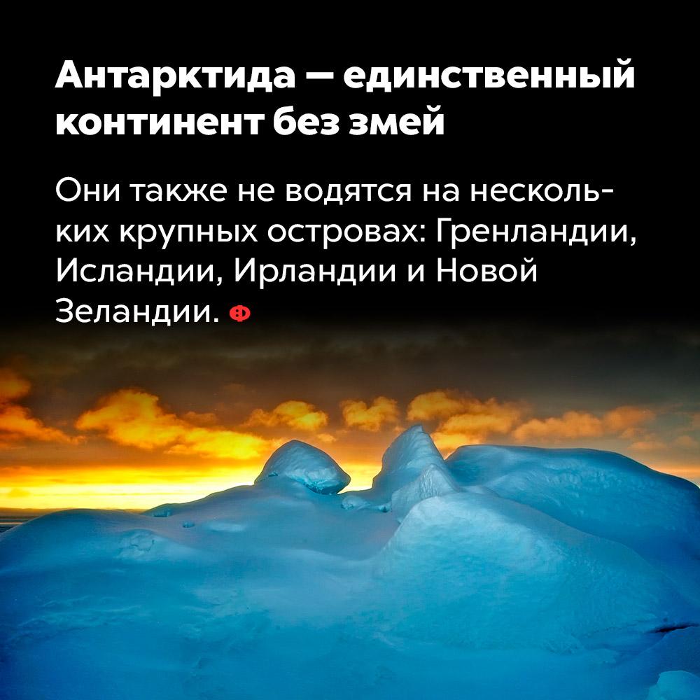 Антарктида — единственный континент без змей. Они также не водятся на нескольких крупных островах: Гренландии, Исландии, Ирландии и Новой Зеландии.