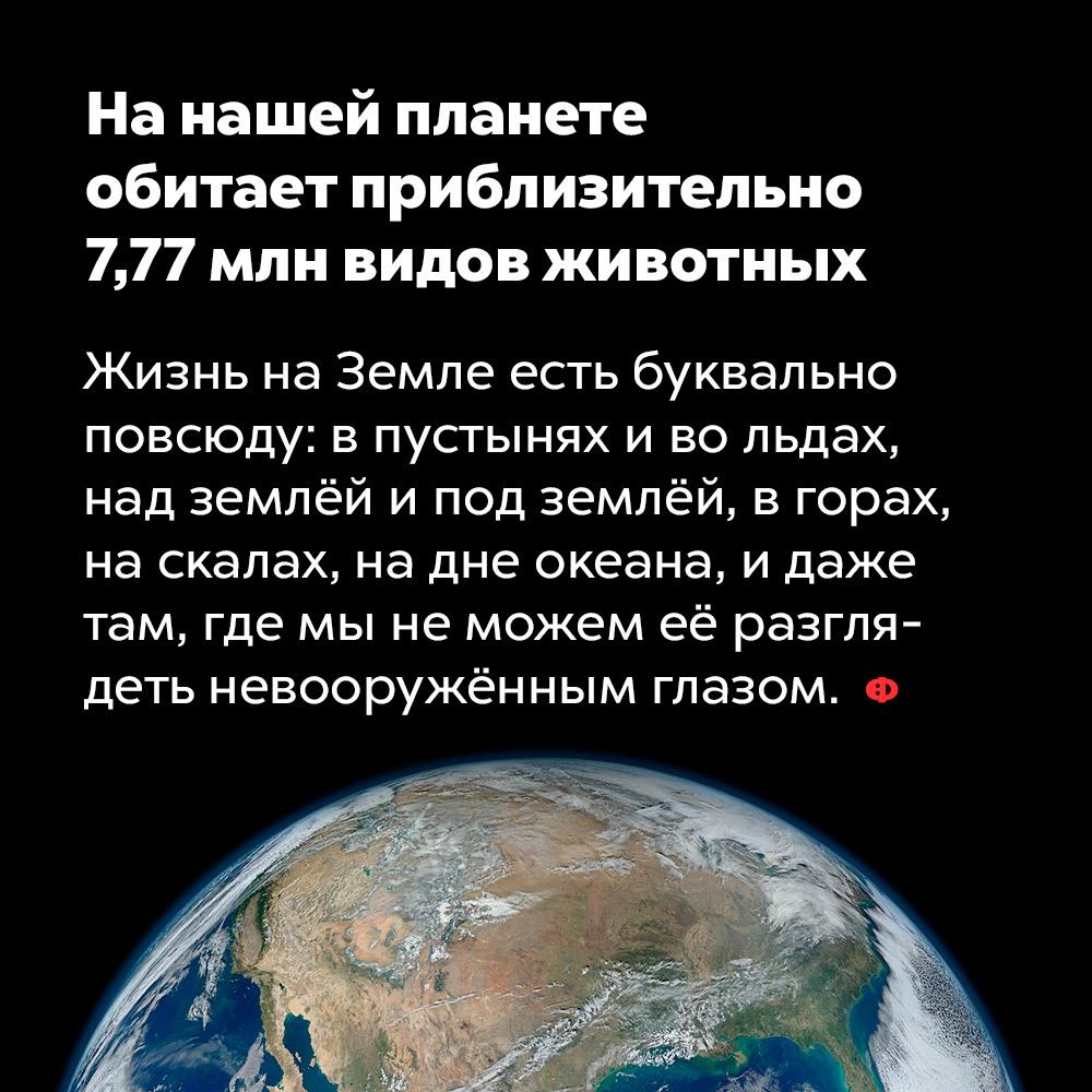 Нанашей планете обитает приблизительно 7,77млн видов животных. Жизнь на Земле есть буквально повсюду: в пустынях и во льдах, над землёй и под землёй, в горах, на скалах, на дне океана, и даже там, где мы не можем её разглядеть невооружённым глазом.