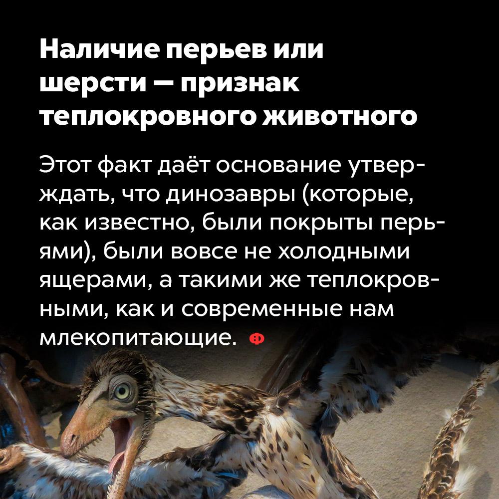 Наличие перьев или шерсти — признак теплокровного животного. Этот факт даёт основание утверждать, что динозавры (которые как известно, были покрыты перьями), были вовсе не холодными ящерами, а такими же теплокровными, как и современные нам млекопитающие.