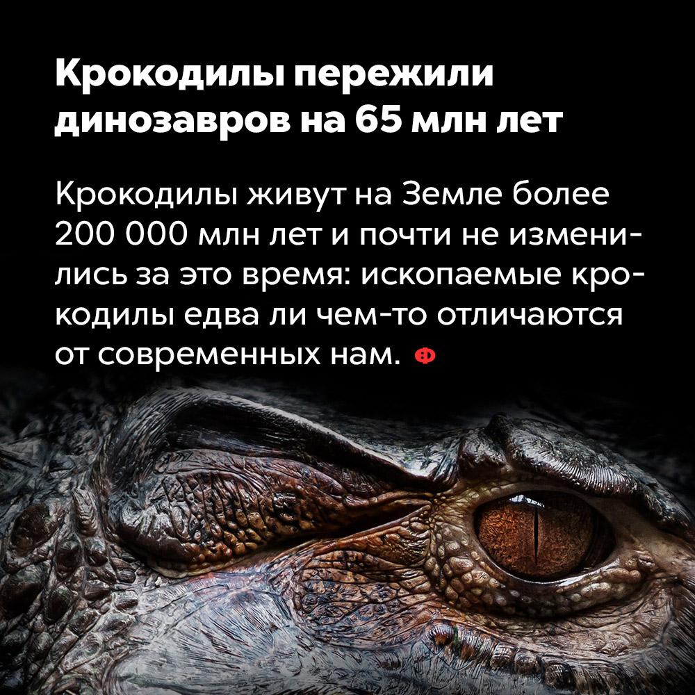 Крокодилы пережили динозавров на65млнлет. Крокодилы живут на Земле более 200 млн лет и почти не изменились за это время: ископаемые крокодилы едва ли чем-то отличаются от современных нам.