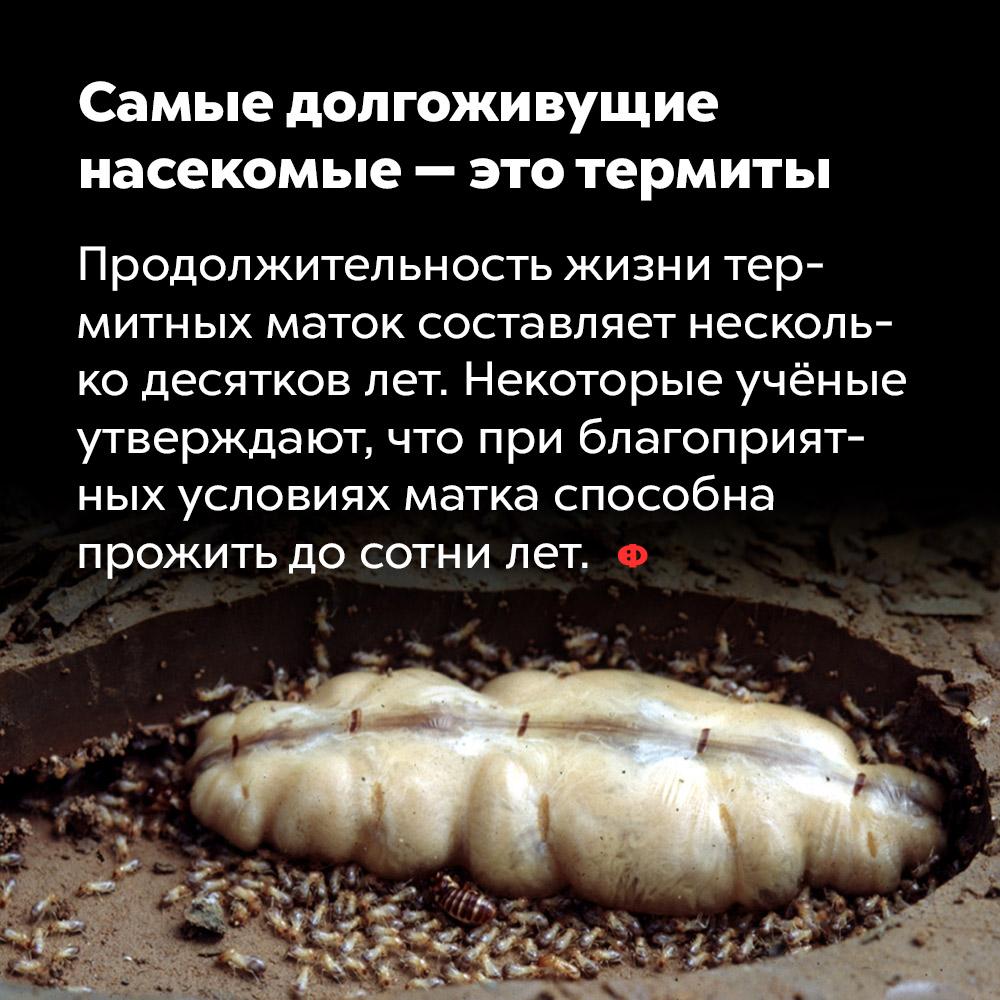 Самые долгоживущие насекомые — это термиты. Продолжительность жизни термитных маток составляет несколько десятков лет. Некоторые учёные утверждают, что при благоприятных условиях матка способна прожить до сотни лет.