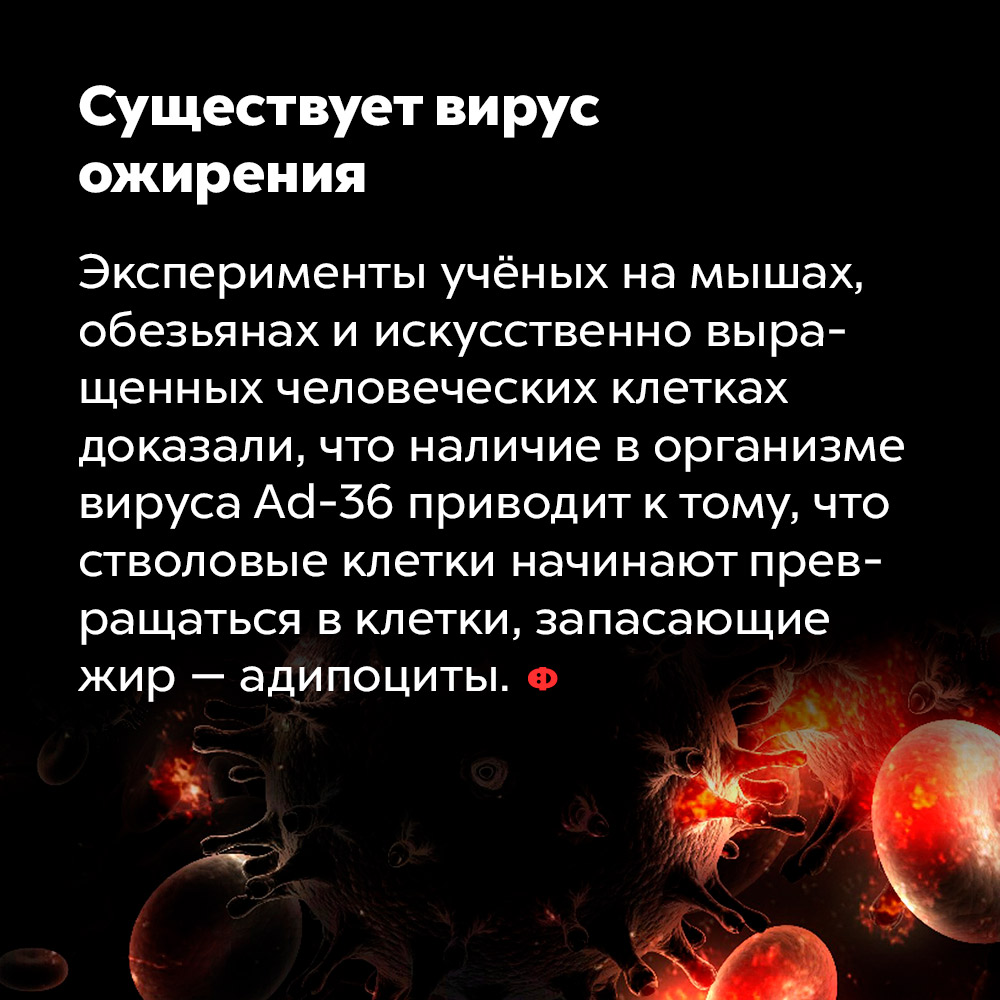 Существует вирус ожирения. Эксперименты учёных на мышах, обезьянах и искусственно выращенных человеческих клетках доказали, что наличие в организме вируса Ad-36 приводит к том, что стволовые клетки начинают превращаться в клетки, запасающие жир адипоциты.