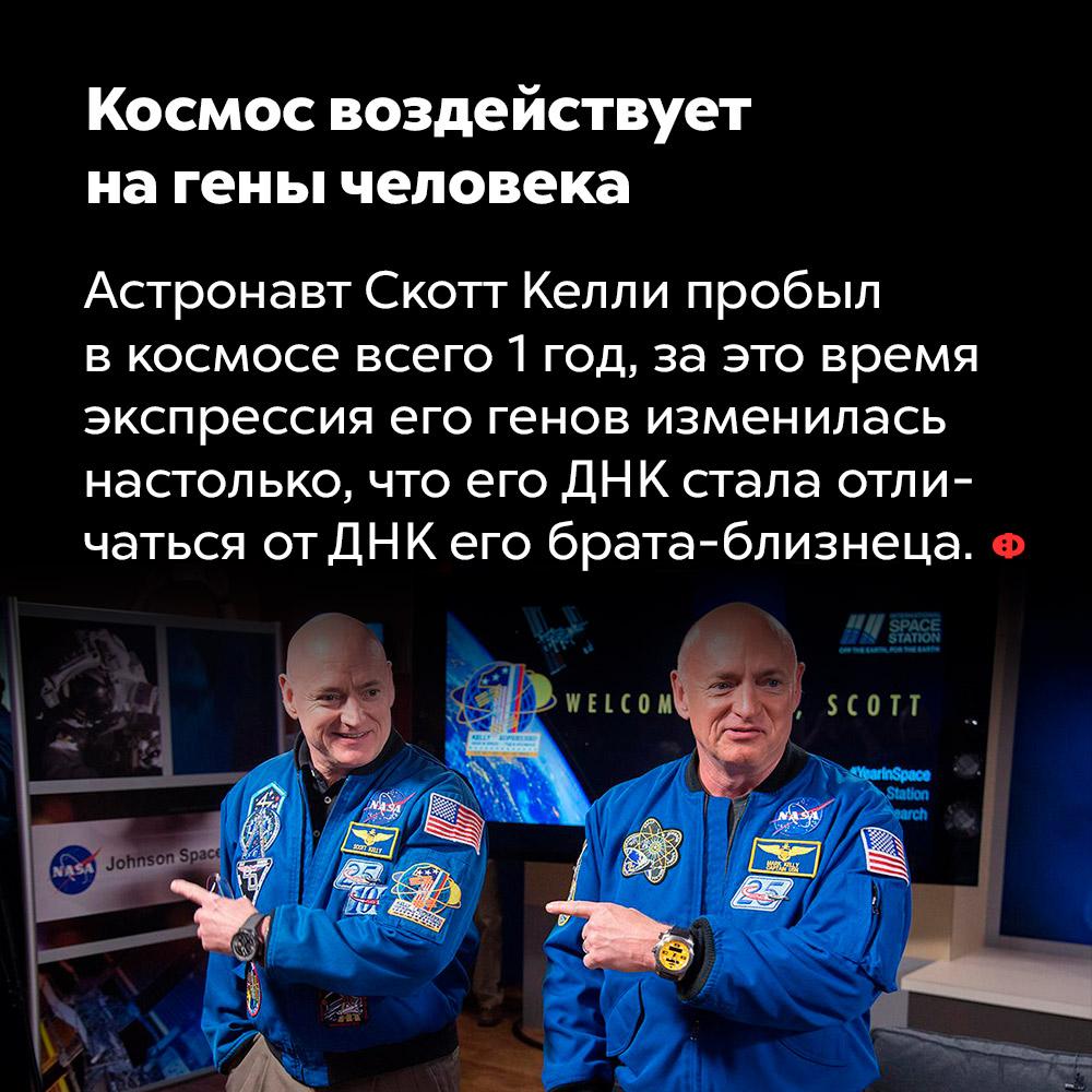 Космос воздействует нагены человека. Астронавт Скотт Келли пробыл в космосе всего 1 год, за это время экспрессия его генов изменилась настолько, что его ДНК стала отличаться от ДНК его брата-близнеца.