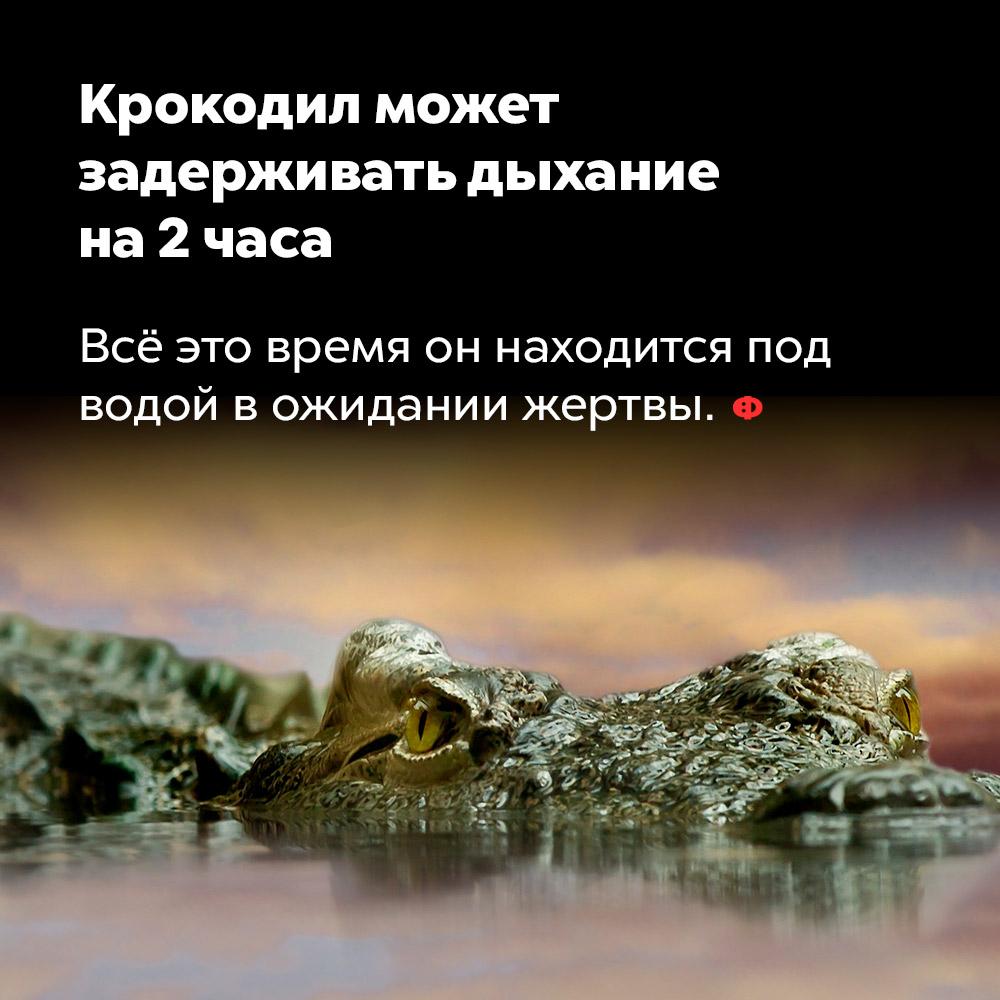 Крокодил может задерживать дыхание на2часа.