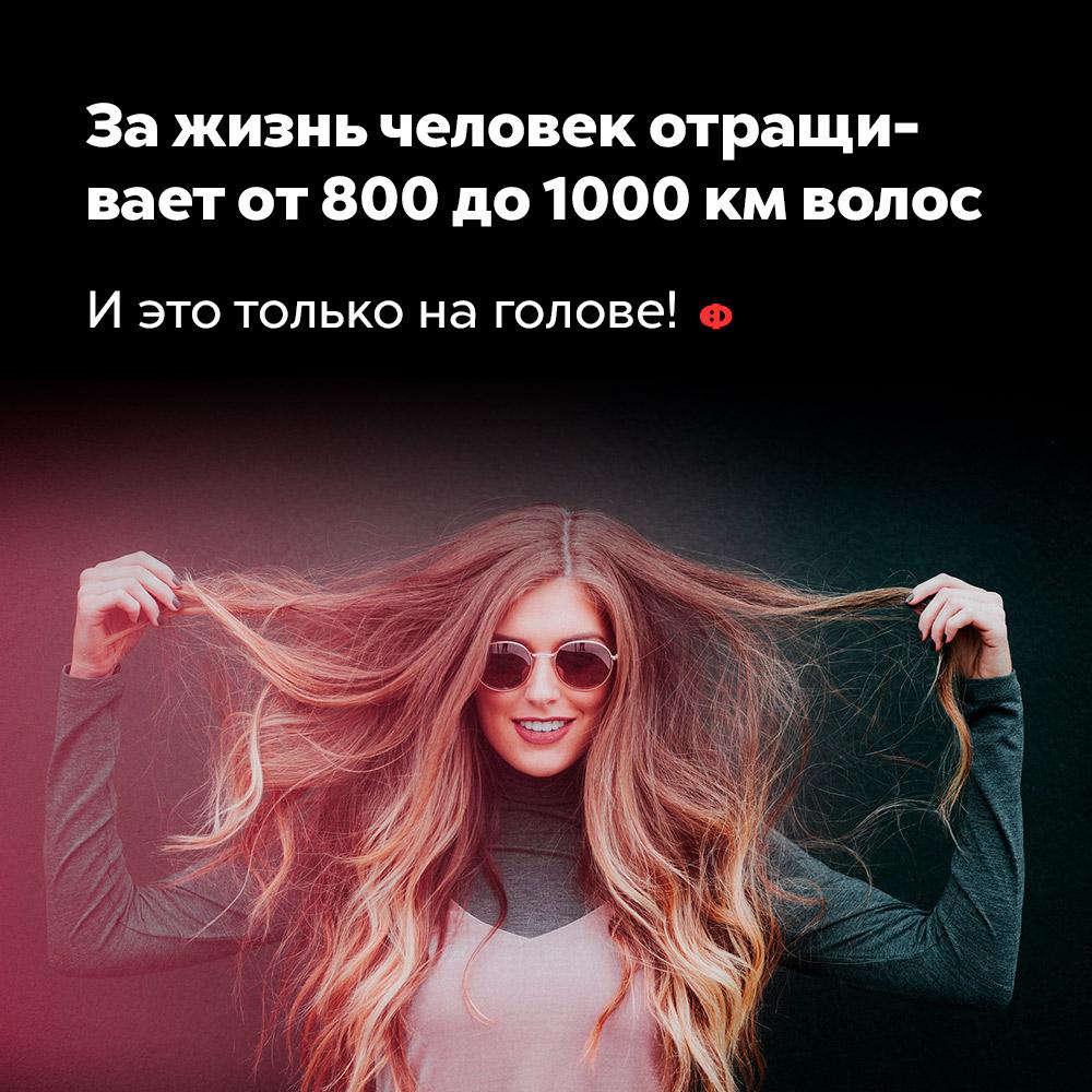 За жизнь человек отращивает от800 до1000км волос. И это только на голове!