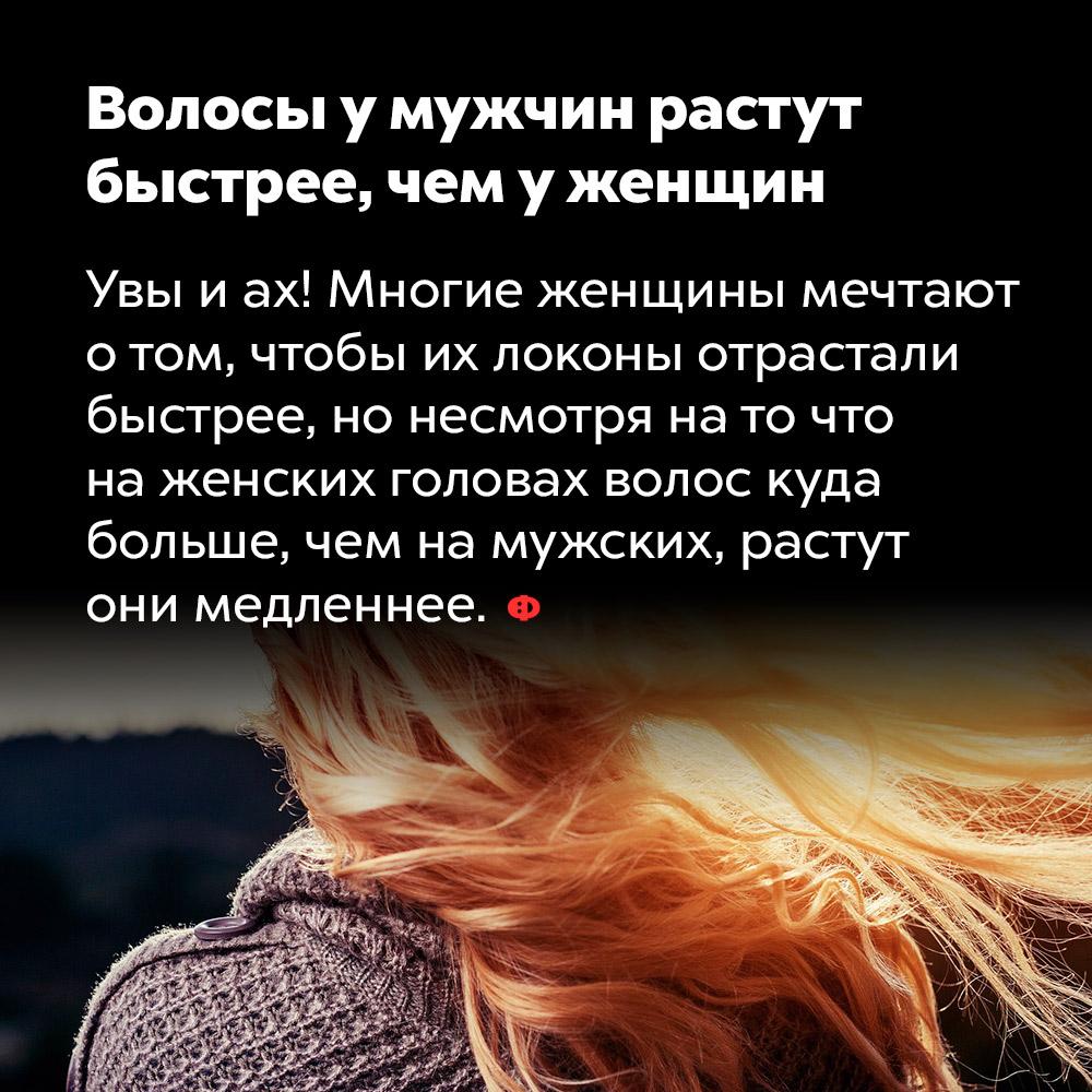 Волосы умужчин растут быстрее, чем уженщин. Увы и ах! Многие женщины мечтают о том, чтобы их локоны отрастали быстрее, но несмотря на то, что на женских головах волос куда больше, чем на мужских, растут они медленнее.