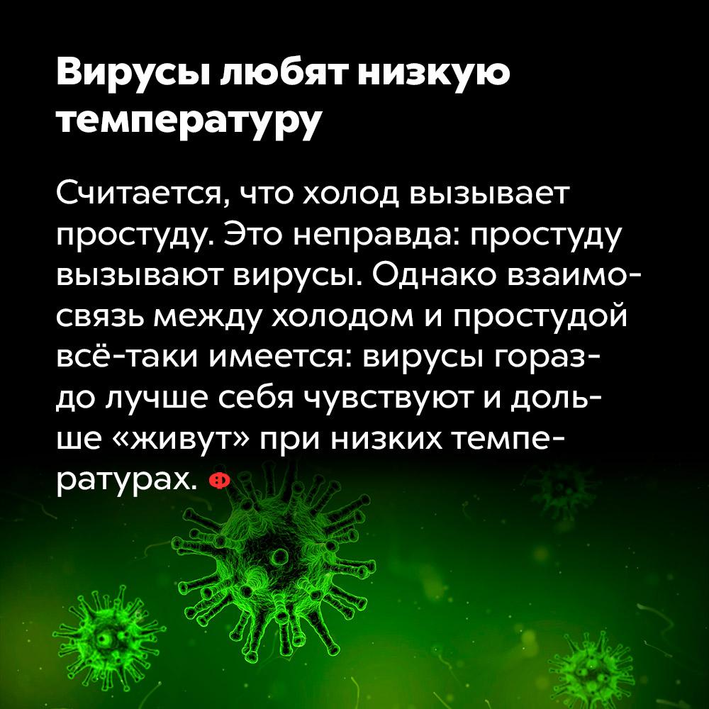 Вирусы любят низкую температуру. Считается, что холод вызывает простуду. Это неправда: простуду вызывают вирусы. Однако взаимосвязь между холодом и простудой всё-таки имеется: вирусы гораздо лучше себя чувствуют и дольше «живут» при низких температурах.