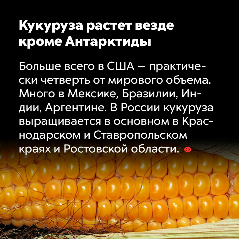 Кукуруза растет везде, кроме Антарктиды. Больше всего в США — практически четверть от мирового объёма. Много в Мексике, Бразилии, Индии, Аргентине. В России кукуруза выращивается, в основном, в Краснодарском и Ставропольском краях и Ростовской области.
