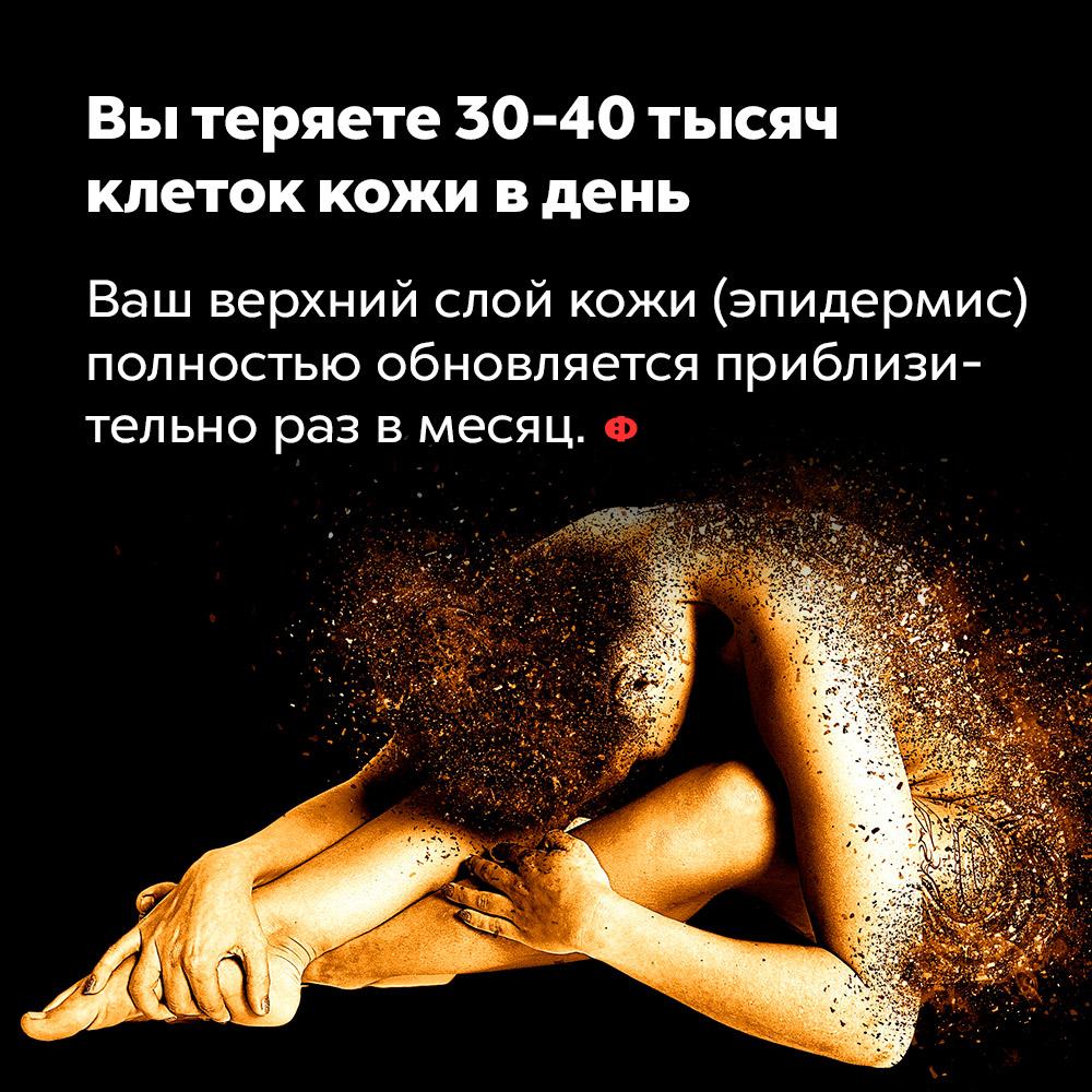 Вы теряете 30-40тысяч клеток кожи вдень. Верхний слой вашей кожи (эпидермис) полностью обновляется приблизительно раз в месяц.