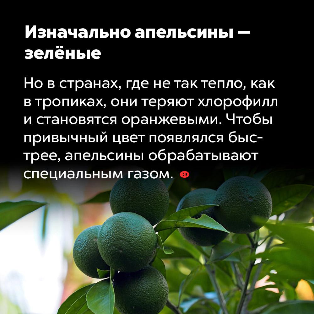 Изначально апельсины — зелёные. Но в странах, где не так тепло, как в тропиках, они теряют хлорофилл и становятся оранжевыми. Чтобы привычный цвет появлялся быстрее, апельсины обрабатывают специальным газом.