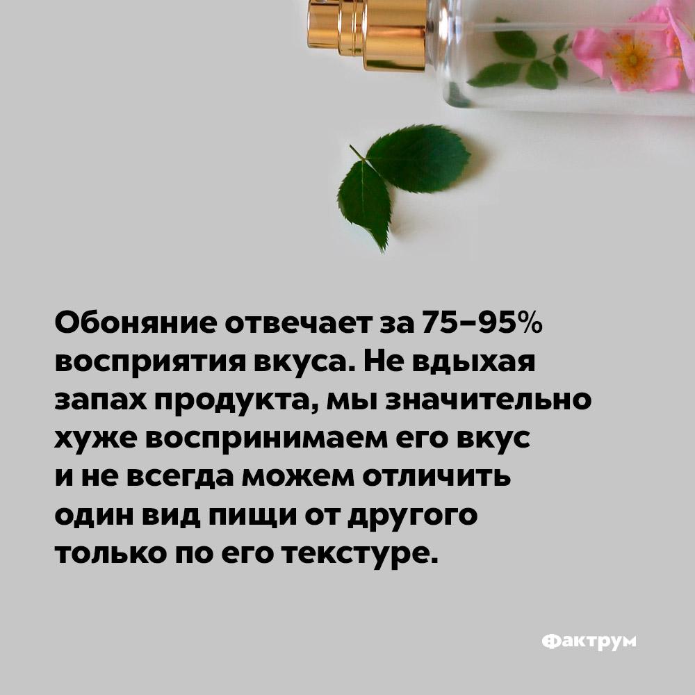 Обоняние отвечает за75–95% восприятия вкуса. Не вдыхая запах продукта, мы значительно хуже распознаём его вкус и не всегда можем отличить один вид пищи от другого только по его текстуре.