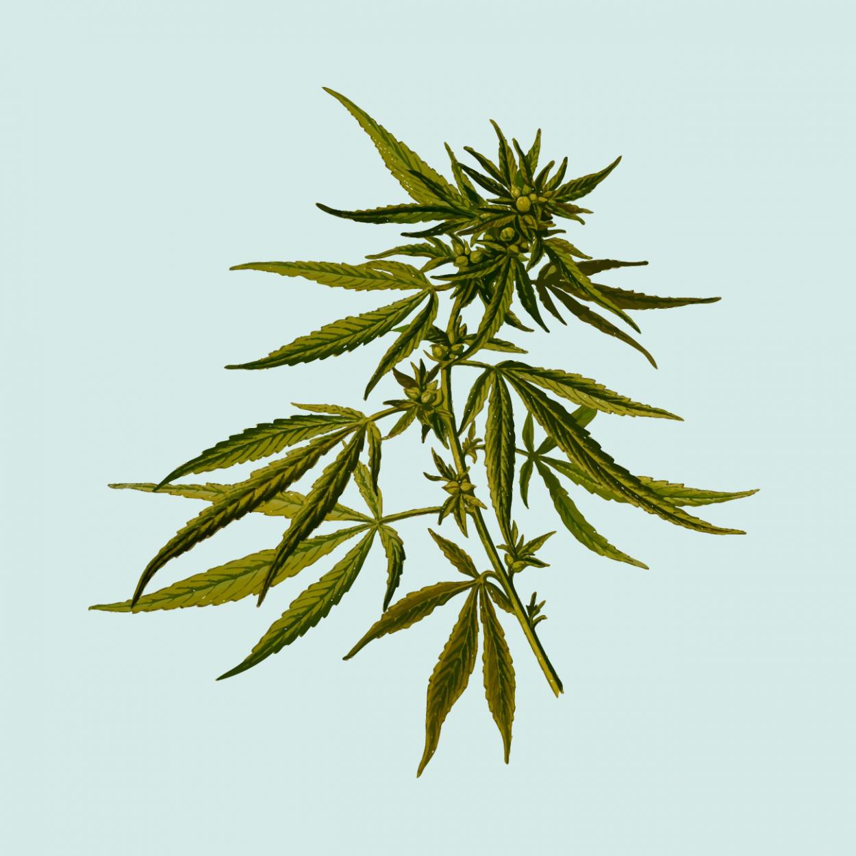 Марихуана и ад дети у которых отцы курят марихуану