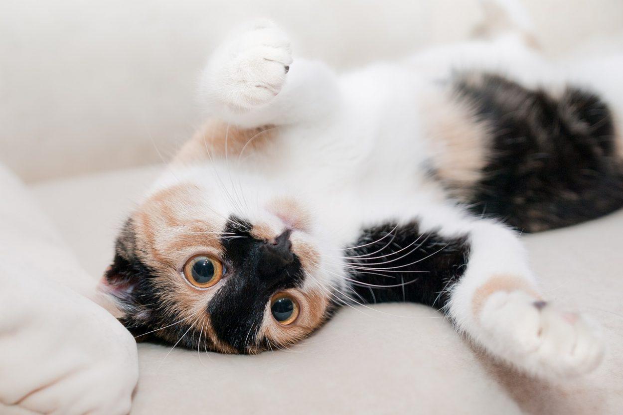 Кошки имитируют плач младенца, чтобы манипулировать хозяевами