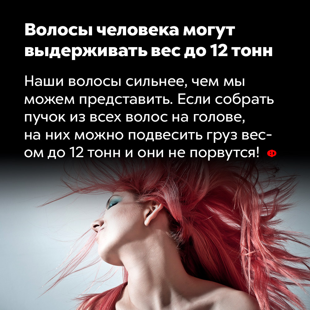Волосы человека могут выдерживать вес до12тонн.