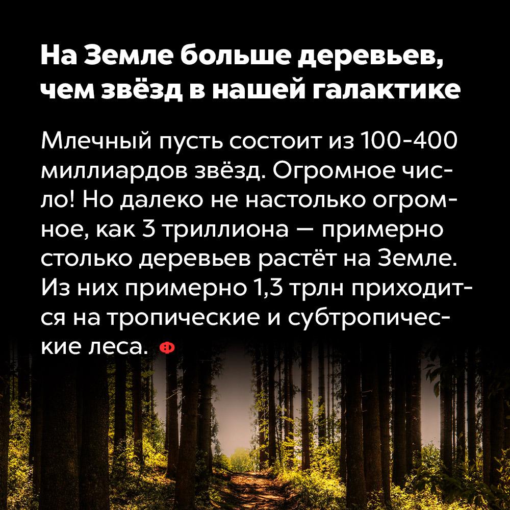 НаЗемле больше деревьев, чем звёзд внашей галактике. Млечный путь состоит из 100-400 миллиардов звёзд. Огромное число! Но далеко не настолько огромное, как 3 триллиона — примерно столько деревьев растёт на Земле. Из них примерно 1,3 трлн приходится на тропические и субтропические леса.