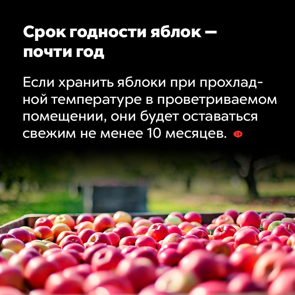 Срок годности яблок — почти год. Если хранить яблоки при прохладной температуре в проветриваемом помещении, они будут оставаться свежими не менее десяти месяцев.