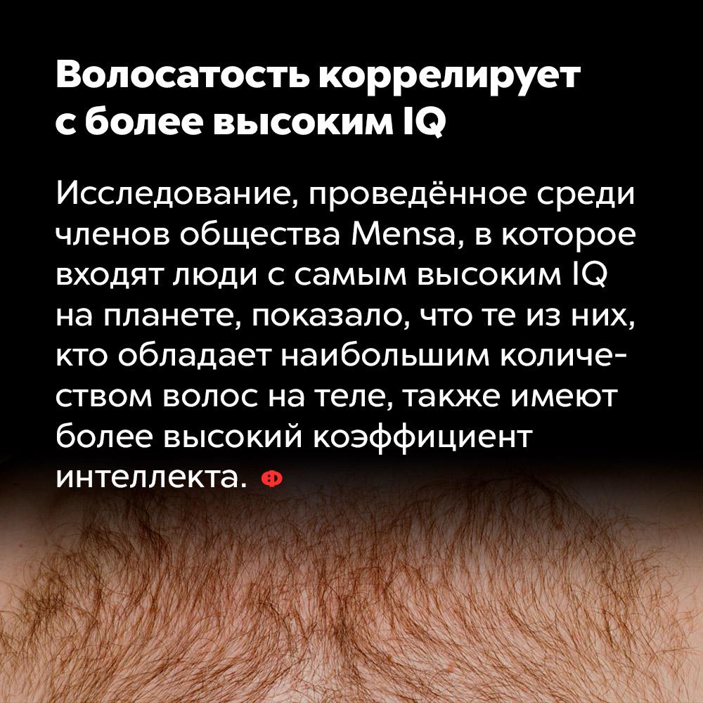 Волосатость коррелирует сболее высоким IQ. Исследование, проведённое среди членов общества Mensa, в которое входят люди с самым высоким IQ на планете, показало, что те из них, кто обладает наибольшим количеством волос на теле, также имеют более высокий коэффициент интеллекта.