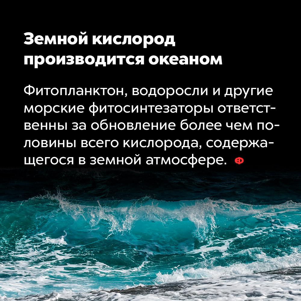 Земной кислород производится океаном. Фитопланктон, водоросли и другие морские фитосинтезаторы ответственны за обновление более чем половины всего кислорода, содержащегося в земной атмосфере.