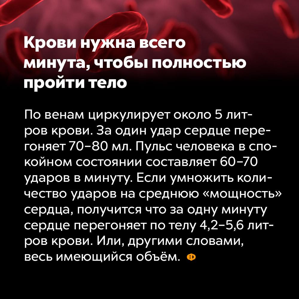 Крови нужна всего минута, чтобы полностью пройти тело. По венам циркулирует около 5 литров крови. За один удар сердце перегоняет 70-80 мл. Пульс человека в спокойном состоянии составляет 60-70 ударов в минуту. Если умножить количество ударов на среднюю «мощность» сердца, получится, что за одну минуту сердце перегоняет по телу 4,2 — 5,6 литров крови. Или, другими словами, весь имеющийся объём.