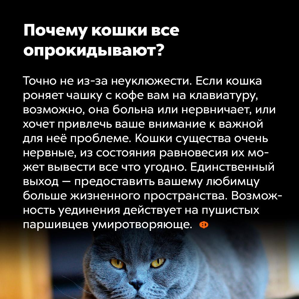 Почему кошки все опрокидывают?. Точно не из-за неуклюжести. Если кошка роняет чашку с кофе вам на клавиатуру, возможно, она больна или нервничает, или хочет привлечь ваше внимание к важной для неё проблеме. Кошки — существа очень нервные, из состояния равновесия их может вывести всё, что угодно. Единственный выход — предоставить вашему любимцу больше жизненного пространства. Возможность уединения действует на пушистых паршивцев умиротворяюще.