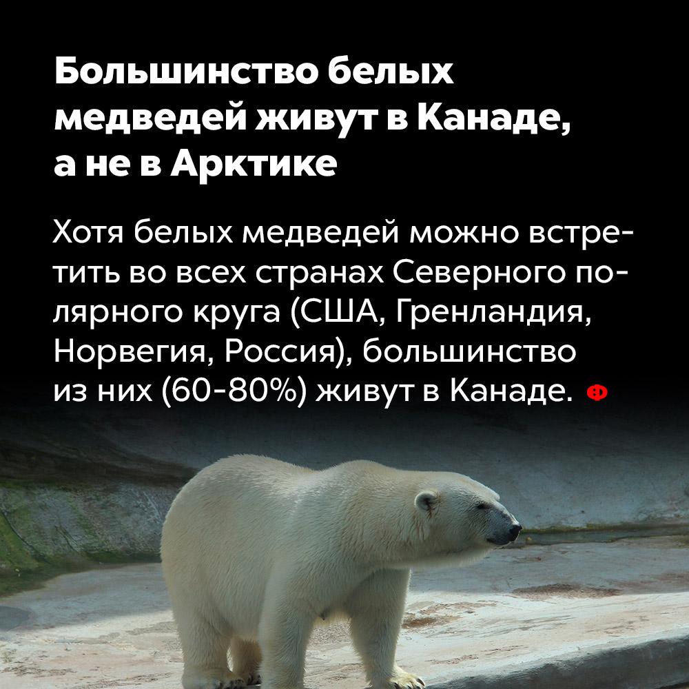 Большинство белых медведей живут вКанаде, аневАрктике. Хотя белых медведей можно встретить во всех странах Северного полярного круга (США, Гренландия, Норвегия, Россия), большинство из них (60-80%) живут в Канаде.
