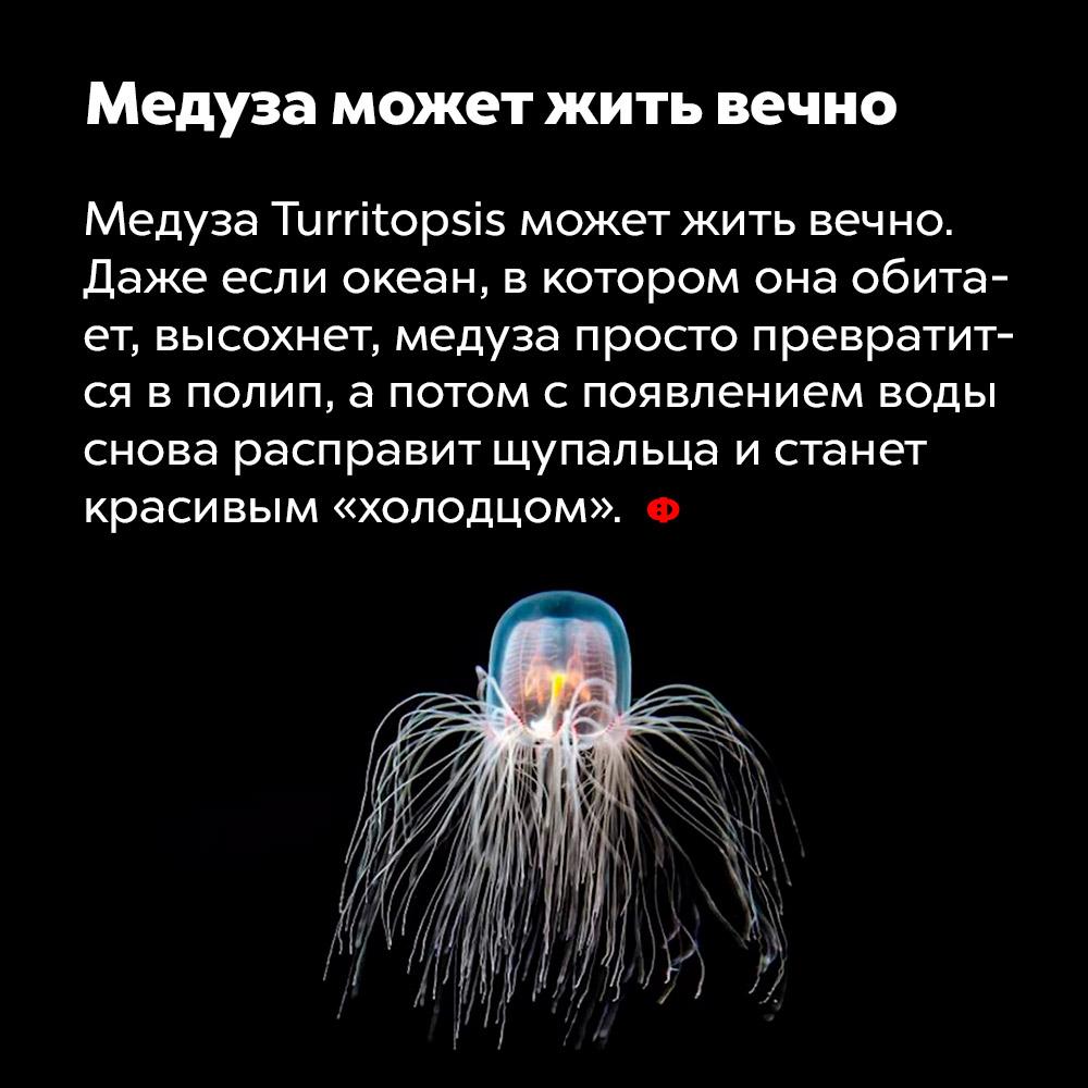 Медуза может жить вечно. Медуза Turritopsis может жить вечно. Даже если океан, в котором она обитает, высохнет, медуза просто превратится в полип, а потом с появлением воды снова расправит щупальца и станет красивым «холодцом».