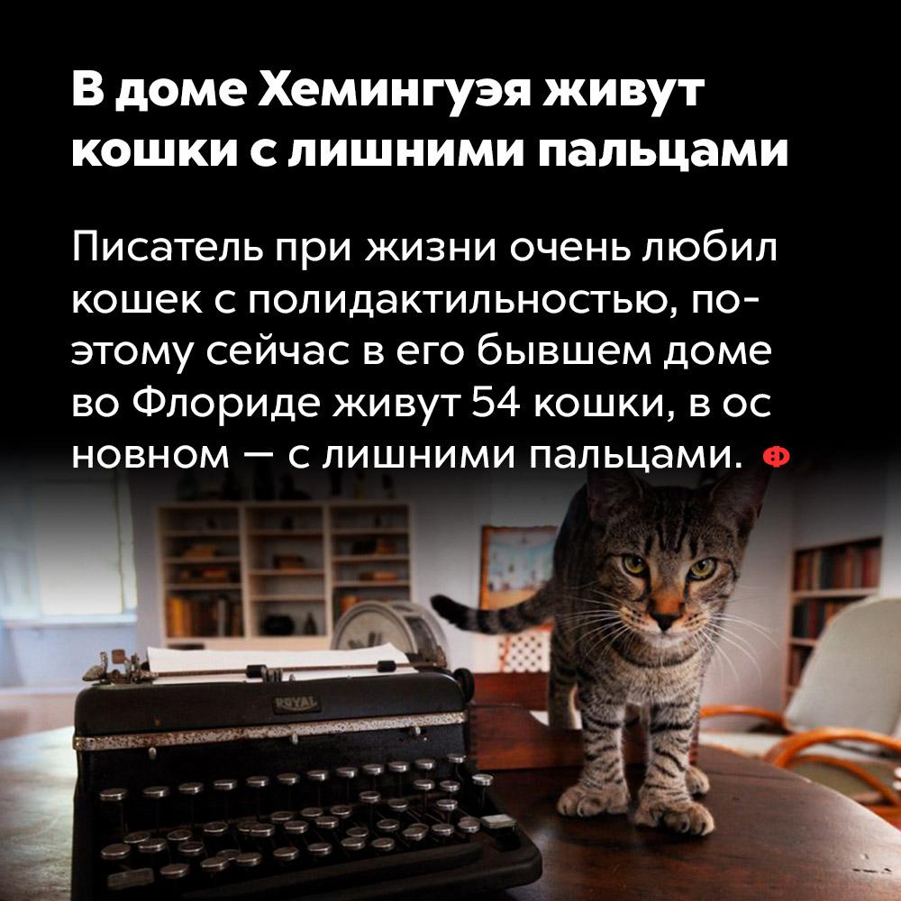 Вдоме Хемингуэя живут кошки слишними пальцами. Писатель при жизни очень любил кошек с полидактильностью, поэтому сейчас в его бывшем доме во Флориде живут 54 кошки, в основном — с лишними пальцами.