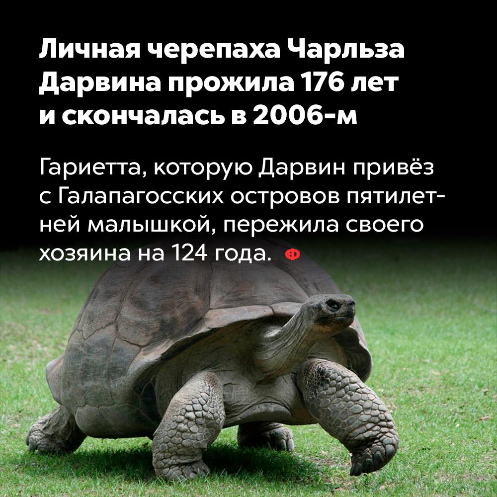 Личная черепаха Чарльза Дарвина прожила 176лет искончалась в2006-м. Гариетта, которую Дарвин привёз с Галапагосских островов пятилетней малышкой, пережила своего хозяина на 124 года.