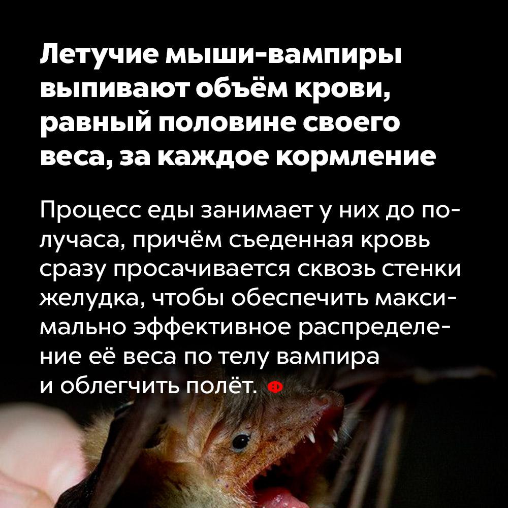 Летучие мыши-вампиры выпивают объём крови, равный половине своего веса, закаждое кормление.