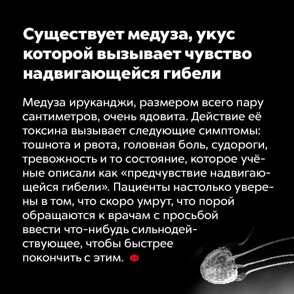 Существует медуза, укус которой вызывает чувство надвигающейся гибели. Медуза ируканджи, размером всего пару сантиметров, очень ядовита. Действие её токсина вызывает следующие симптомы: тошнота и рвота, головная боль, судороги, тревожность и то состояние, которое учёные описали как «предчувствие надвигающейся гибели». Пациенты настолько уверены в том, что скоро умрут, что порой обращаются к врачам с просьбой ввести что-нибудь сильнодействующее, чтобы быстрее покончить с этим.
