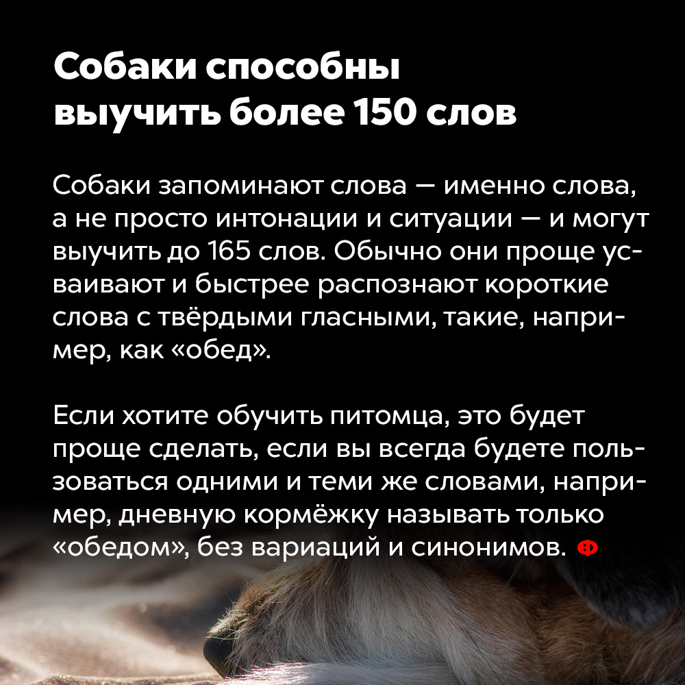 Собаки способны выучить более 150слов.