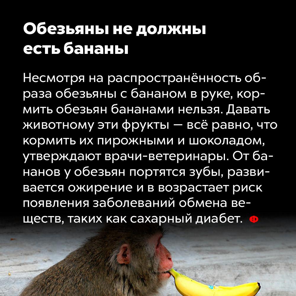Обезьяны недолжны есть бананы. Несмотря на распространённость образа обезьяны с бананом в руке, кормить обезьян бананами нельзя. Давать животному эти фрукты — всё равно, что кормить их пирожными и шоколадом, утверждают врачи-ветеринары. От бананов у обезьян портятся зубы, развивается ожирение и возрастает риск появления заболеваний обмена веществ, таких как сахарный диабет.