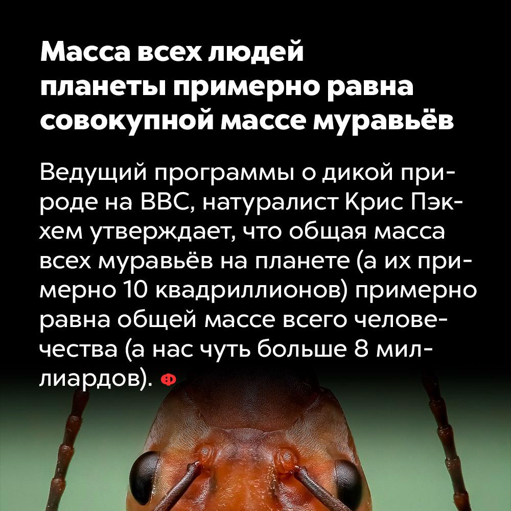 Масса всех людей планеты примерно равна совокупной массе муравьёв. Ведущий программы о дикой природе на BBC, натуралист Крис Пэкхем утверждает, что общая масса всех муравьёв на планете (а их примерно 10 квадриллионов) примерно равна общей массе всего человечества (а нас чуть больше 8 миллиардов).