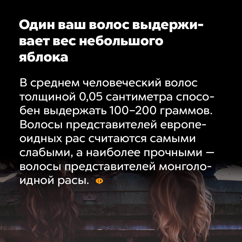 Один ваш волос выдерживает вес небольшого яблока. В среднем человеческий волос толщиной 0,05 сантиметра способен выдержать 100-200 граммов. Волосы представителей европеоидных рас считаются самыми слабыми, а наиболее прочными — волосы представителей моноголоидной расы.