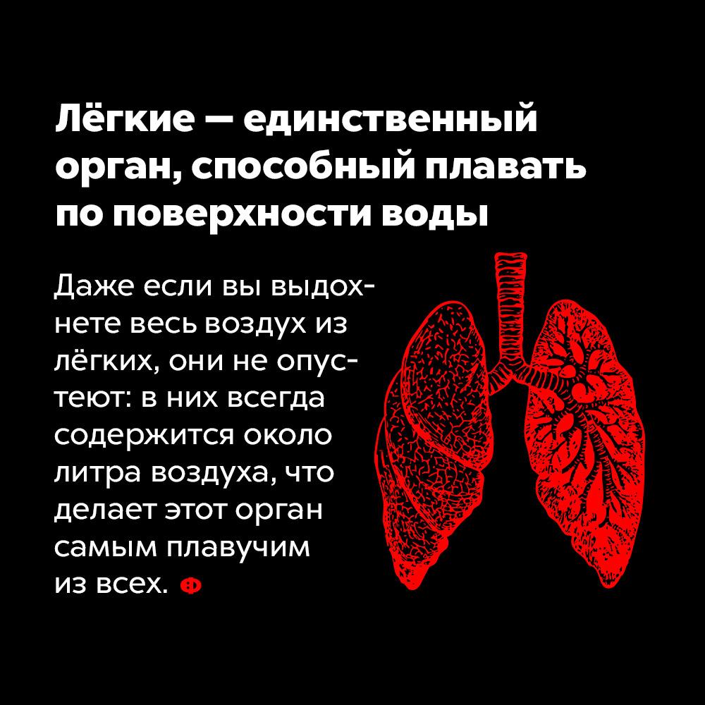 Лёгкие — единственный орган, способный плавать поповерхности воды. Даже если вы выдохнете весь воздух из лёгких, они не опустеют: в них всегда содержится около литра воздуха, что делает этот орган самым плавучим из всех.