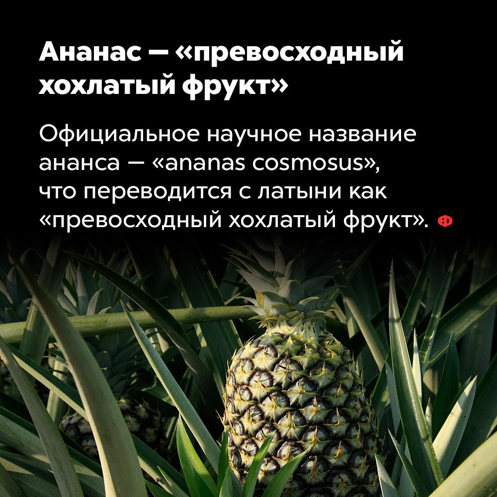 Ананас — «превосходный хохлатый фрукт». Официальное научное название ананаса — «ananas cosmosus», что переводится с латыни как «превосходный хохлатый фрукт».