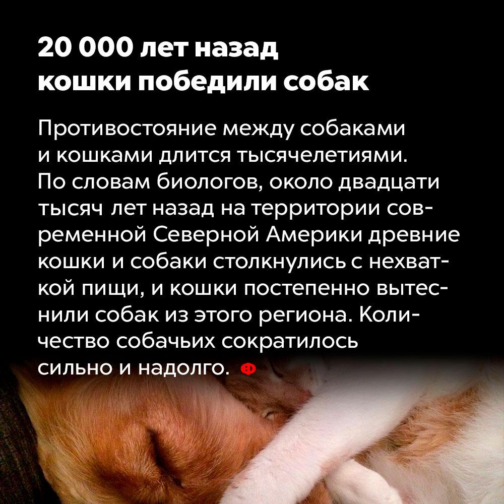 20000лет назад кошки победили собак. Противостояние между собаками и кошками длится тысячелетиями, По словам биологов, около двадцати тысяч лет назад на территории современной Северной Америки древние кошки и собаки столкнулись с нехваткой пищи, и кошки постепенно вытеснили собак из этого региона. Количество собачьих сократилось сили и на долго.