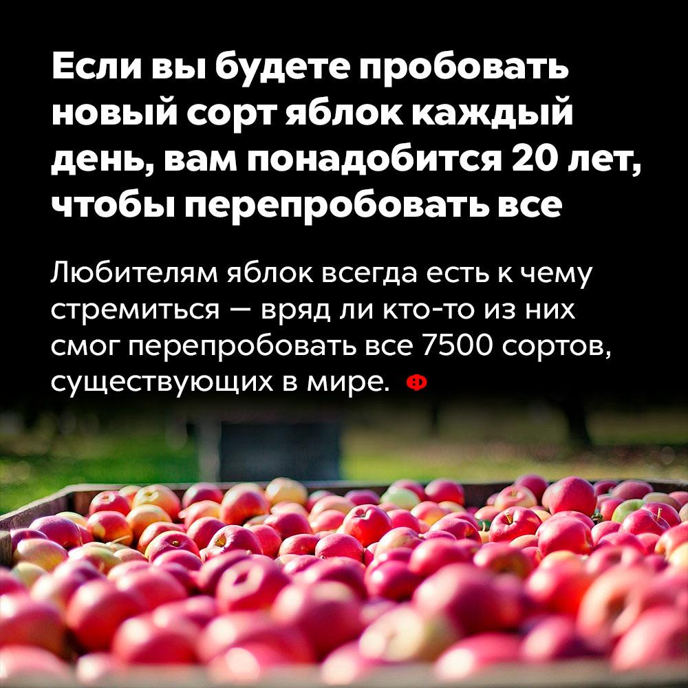Если вы будете пробовать новый сорт яблок каждый день, вам понадобится 20лет, чтобы перепробовать все. Любителям яблок всегда есть к чему стремиться — вряд ли кто-то из них смог перепробовать все 7500 сортов, существующих в мире.