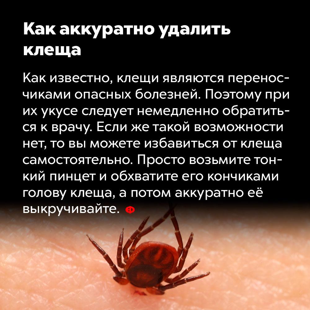 Как аккуратно удалить клеща. Как известно, клещи являются переносчиками опасных болезней. Поэтому при их укусе следует немедленно обратиться к врачу. Если же такой возможности нет, то вы можете избавиться от клеща самостоятельно. Просто возьмите тонкий пинцет и обхватите его кончиками голову клеща, а потом аккуратно её выкручивайте.
