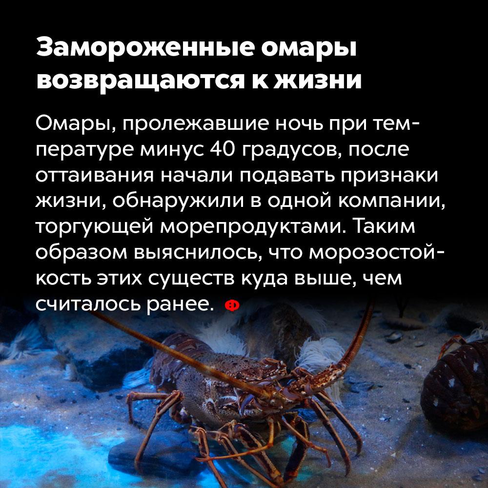 Замороженные омары возвращаются кжизни. Омары, пролежавшие ночь при температуре минус сорок градусов, после оттаивания начали подавать признаки жизни, обнаружили в одной компании, торгующей морепродуктами. Таким образом выяснилось, что морозостойкость этих существ куда выше, чем считалось ранее.