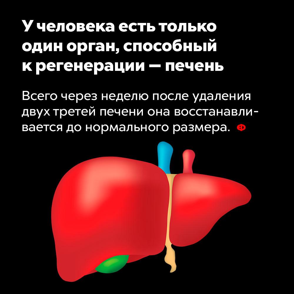 Учеловека есть только один орган, способный крегенерации — печень. Всего через неделю после удаления двух третей печени она восстанавливается до нормального размера.