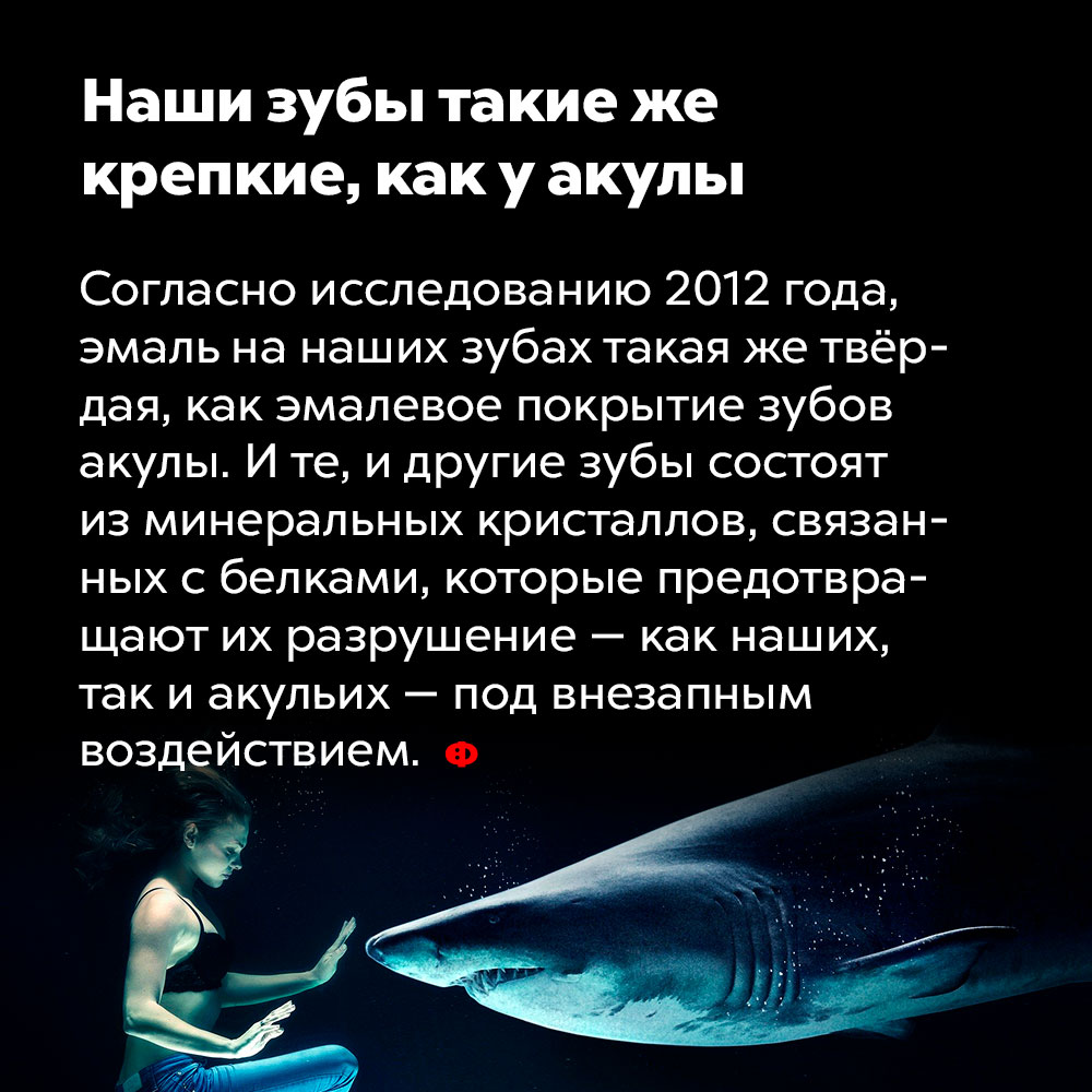 Наши зубы такие же крепкие, как уакулы. Согласно исследованию 2012 года, эмаль на наших зубах такая же твёрдая, как эмалевое покрытие зубов акулы. И те, и другие зубы состоят из минеральных кристаллов, связанных с белками, которые предотвращают их разрушение — как наших, так и акульих —под внезапным воздействием.