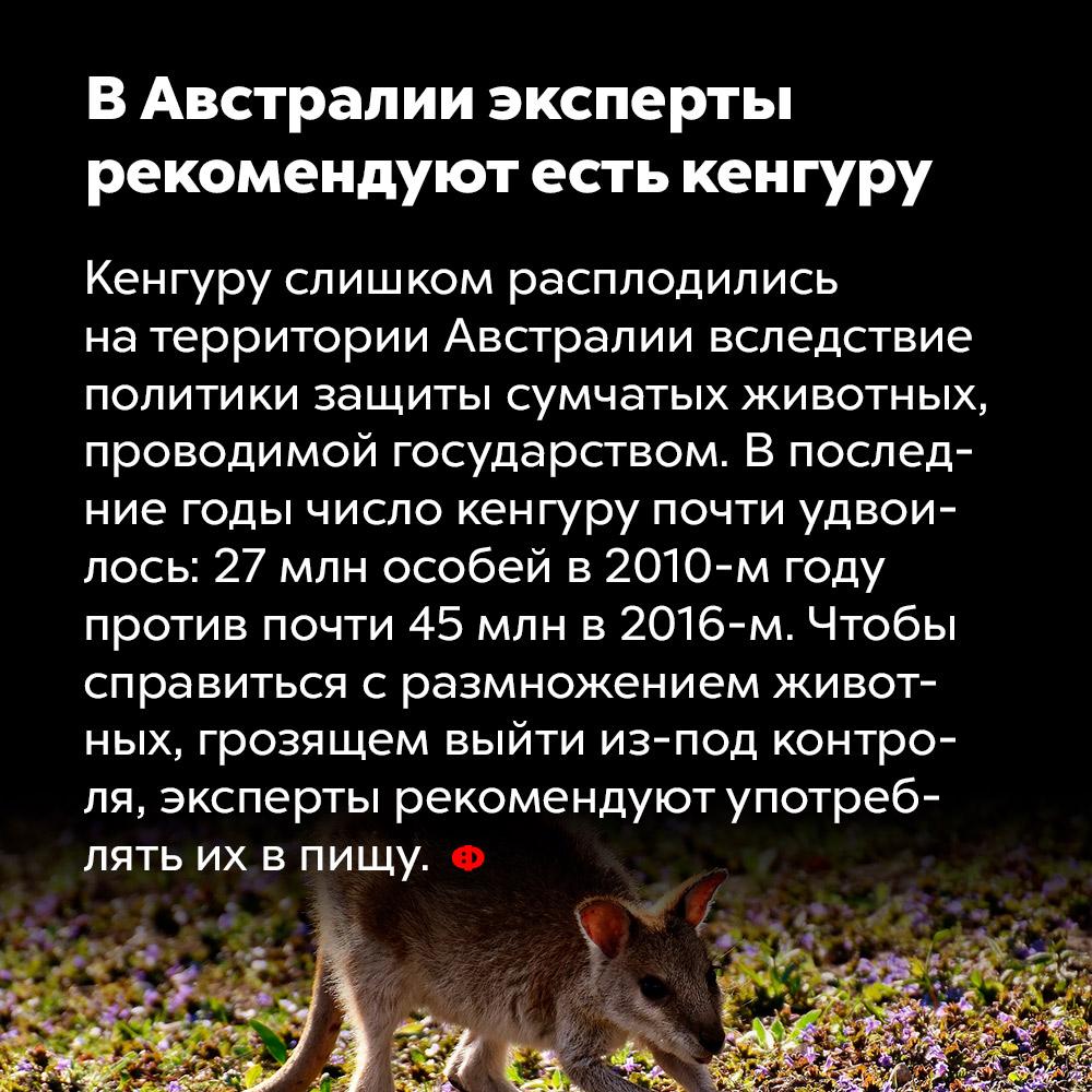 ВАвстралии эксперты рекомендуют есть кенгуру. Кенгуру слишком расплодились на территории Австралии вследствие политики защиты сумчатых животных, проводимой государством. В последние годы число кенгуру почти удвоилось: 27 млн особей в 2010 году против почти 45 млн в 2016. Чтобы справиться с размножением животных, грозящем выйти из-под контроля, эксперты рекомендуют употреблять их в пищу.
